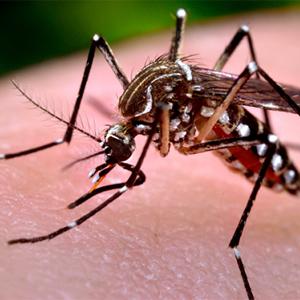 Người bị sốt xuất huyết có dấu hiệu gì?