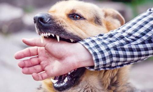 Cà Mau: Hai người tử vong do không tiêm ngừa khi bị chó cắn